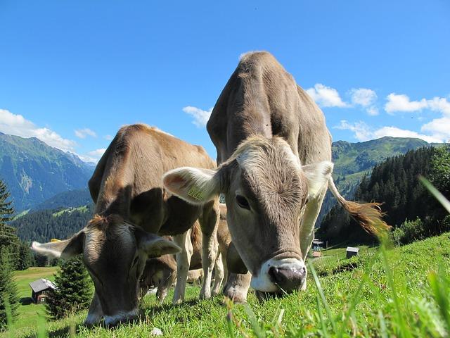 movimentos anti-carne e aumentar as vendas de um talho.